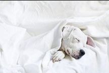 hounds / Cute canines - pampered pups & snoozy hounds.