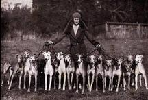 Hound Breeds / Different breeds in the Hound Group