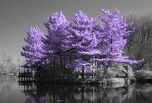 Příroda - flóra / Nature