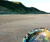 The Sea & shells