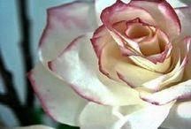 DIY - květy vyrobené z různých materiálů / Creative - flowers made from different materials květy vyrobené z různých materiálů
