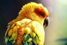 Příroda - fauna