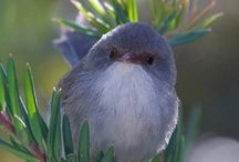 Birds & Bird Watching