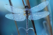 All Things Dragonfly-ness / by Yvonne Johnson