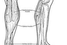 Ankle Equinus Information / If so, here are some helpful hints and techniques that you can use to help.