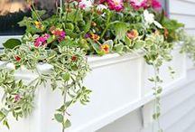 Outdoor Love / I live in Agricultural zones 9-10... but you'll find ideas for your zones here as well! Curb appeal, gardens, composting tips, and everything you need to make your outdoor space a beautiful oasis.