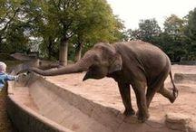 Dumbo is my favorite / by Marissa Wilson