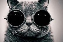 Kitty Kat / by Tim Taylor