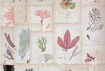 science & nature Illustration / .