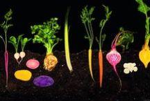 FOOD | la scienza dai semi al piatto / La grande mostra sulla scienza del cibo
