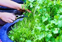 Home: Gardening Tips & Projects / by Wendy Epps