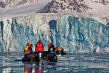 European Arctic / Say hello! #arctic #wildlife #tripofalifetime #Auroraexpeditions
