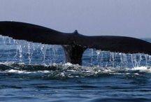 Ocean Image Zoo