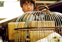 Harry Potter / by Marilyn Holland