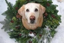 Brock!!!! Rest In Peace My Puppy Boy!!!! / by Janice McCarley