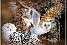 Owls & Pussycats / by Janie Schaafsma