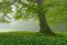 Trees / by Janie Schaafsma