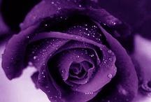 Purpleish / by Saara Ravenfeathers