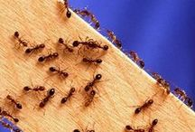 Pest & Insect Control Tips / Tips and ideas to help keep insects and pests in check in the home and garden. / by Janie Qualls