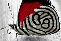 Butterflies / by Claudia Ehli