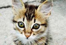 Animaux / Les animaux les plus mignons!