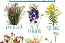 Green Thumb Gardening Tips / Green Thumb Gardening Tips