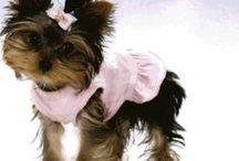 Fur Baby Carley