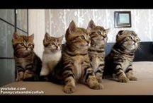 CAT VIDEOS=^.^=