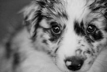 PJ Loves |  Pup Photography / We can't forget our furry family members, so we're dedicating an entire board just for dogs. It's also a great board to get photo ideas for your Doggy photo charms.