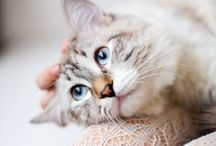 PJ Loves | Feline Photography / Those sweet faces can make our heart melt! We know how important our feline friends are, so we're dedicating a board just for them. It's also a great place to get photo inspiration for your charms!