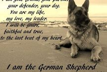 for the love of German Shepherds / anything dog/GS related