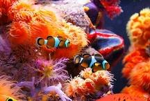 fish --- beautiful!!!!!