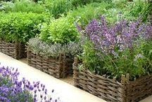 Garden - Raised Beds