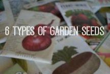 Garden - Seed Starting