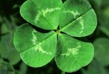 Cards/St. Patrick's Day / by Brenda Rose-Johnson