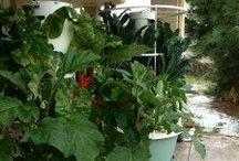 Garden - Aeroponic Tower Garden / #Aeroponic #gardening No bending, No Soil, No Weeding! www.DenverTowerGarden.com