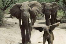 Elephants  / by Laurie