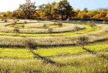 Planting Design / Thoughtful and beautiful planting schemes.