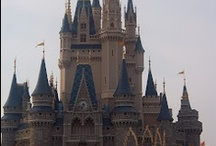 The Disney College Program  / All you ever wanted to know about The Disney College Program.