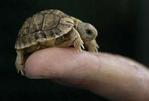 Turtle Love / I'm a turtle lover! I have a western painted turtle named Spike. :)