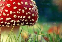 Funghi da fare o da raccogliere