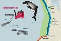 Infographics / Inspiration . Information . Conservation / by WWF International