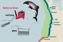Infographics / Inspiration . Information . Conservation