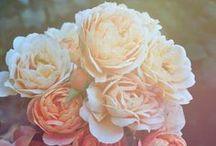 Simply Beautiful :)