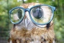 Owls / by Brandi Matthews
