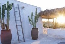 Desert Life - AZ