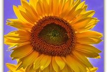 Beautiful Flowers / by Elizabeth Astin