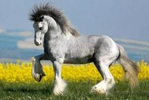 Magnificent Horses / by Elizabeth Astin