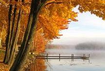 Autumn Splendour / by Elizabeth Astin