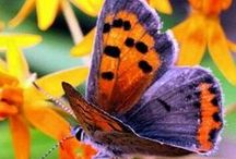 Butterflies and such / by Elizabeth Astin